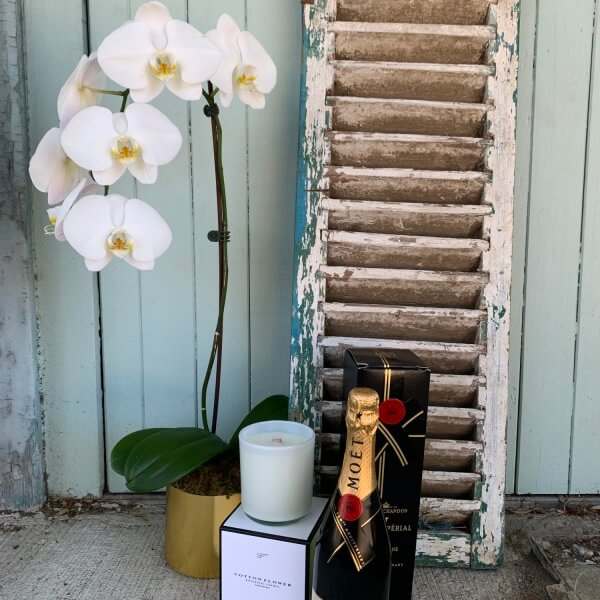 Phalaenopsis ,plant , moet and candle