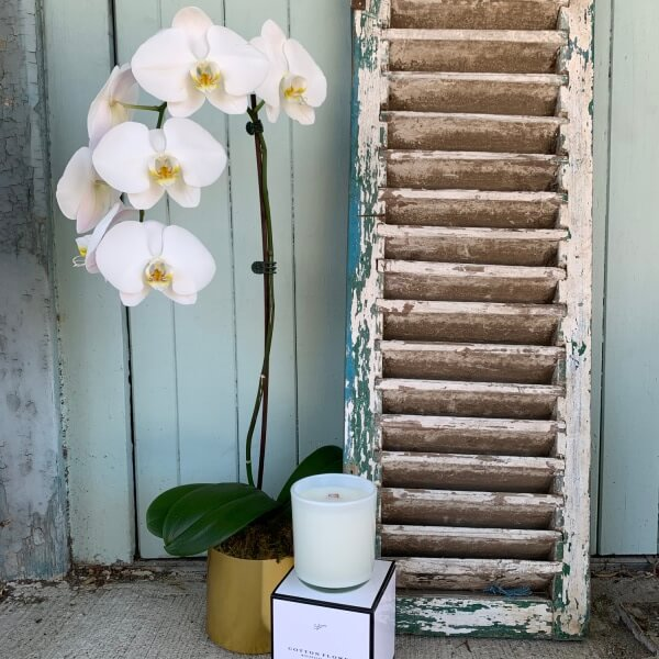 Phalaenopsis Scented Gift