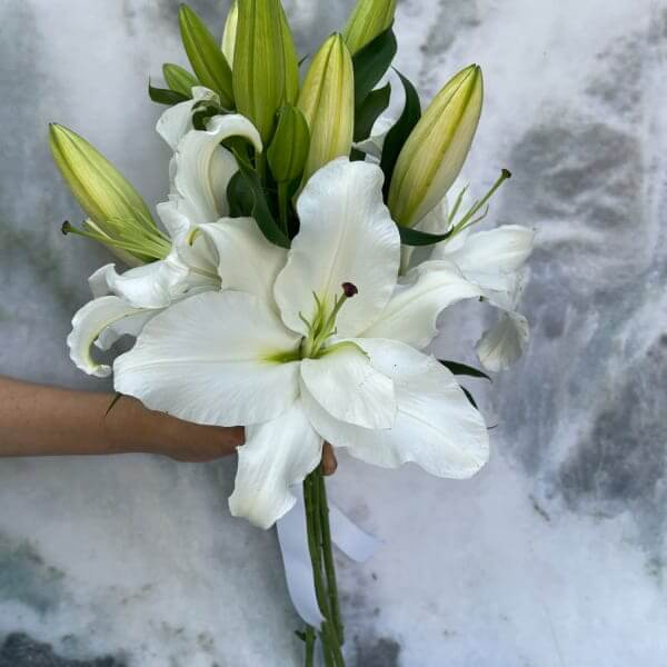 White Casablanca Lilly